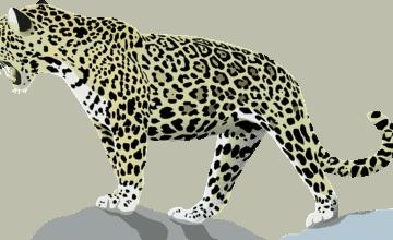 Jaguar escapa de su jaula en zoológico de Nueva Orleans y mata a otros seis animales