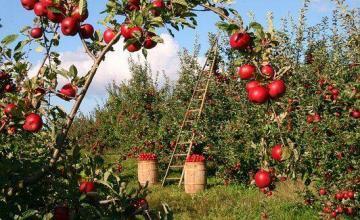 Sanción en supermercado cubano por venta de 15 mil manzanas a un cliente