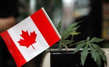 Canadá incauta 180 kilos de metanfetamina escondidos en automóviles fabricados en México