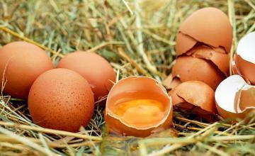 Cuba: exorbitantes multas por tener dos docenas de huevos sin justificar