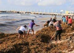 López Obrador minimiza invasión de sargazo en Caribe mexicano
