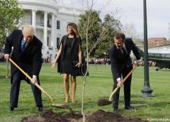 Murió árbol que plantaron Trump y Macron en señal de amistad