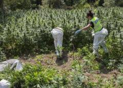 La Policía chilena decomisa 949 kilos de marihuana y detiene a tres colombianos