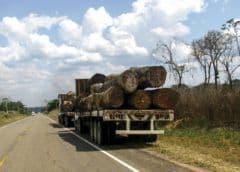 Estudio: funcionarios de Perú, cómplices de lavado de madera
