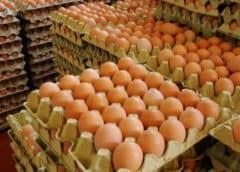 Cuentapropista cubana condenada a un año de prisión por comprar 70 cartones de huevos