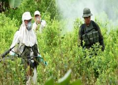 Colombia: anuncian aspersión aérea contra cultivos ilícitos