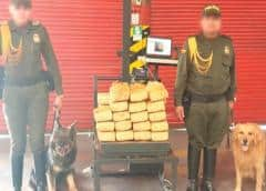 Colombia: hallan cocaína en carga de champú para caballos