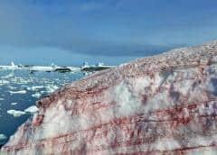 El motivo por el que ha aparecido nieve de color rosa en la Antártida