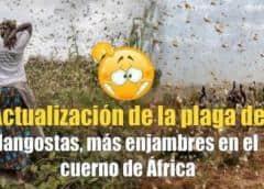 Nueva oleada de langostas amenaza el este de África