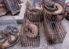 Shenzhen prohíbe comer animales silvestres