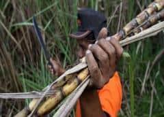 Destilerías de ron venezolano se suman a la lucha contra el COVID-19