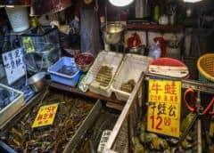 Mercado de Wuhan tuvo rol en brote virus, pero hay que investigar más: OMS
