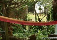 Maryland: 19 heridos por un árbol derribado en una tormenta