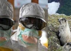 Reaparición de la peste bubónica en China: por qué no hay motivo de alarma