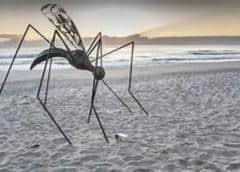 Tres nuevos casos de dengue en los Cayos de Florida elevan el total a 15