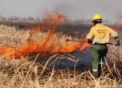 Incendios en el Delta del Paraná: el desmonte en Argentina no cesa