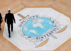 Operación de la Interpol contra el tráfico de animales termina con casi 700 detenidos