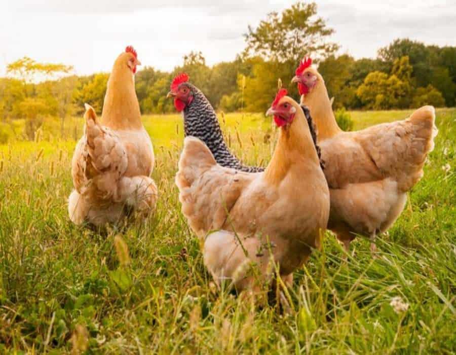 Rusia confirma el primer caso de gripe aviar H5N8 que ha saltado a un ser humano en el país