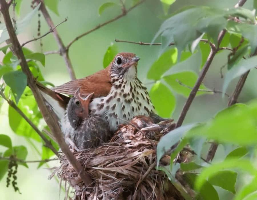 Incremento de muertes entre aves de Carolina del Norte amenaza a perros y gatos