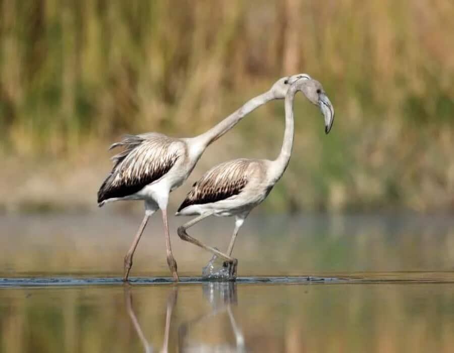 Aves migratorias, un bioindicador del planeta que no entiende de fronteras